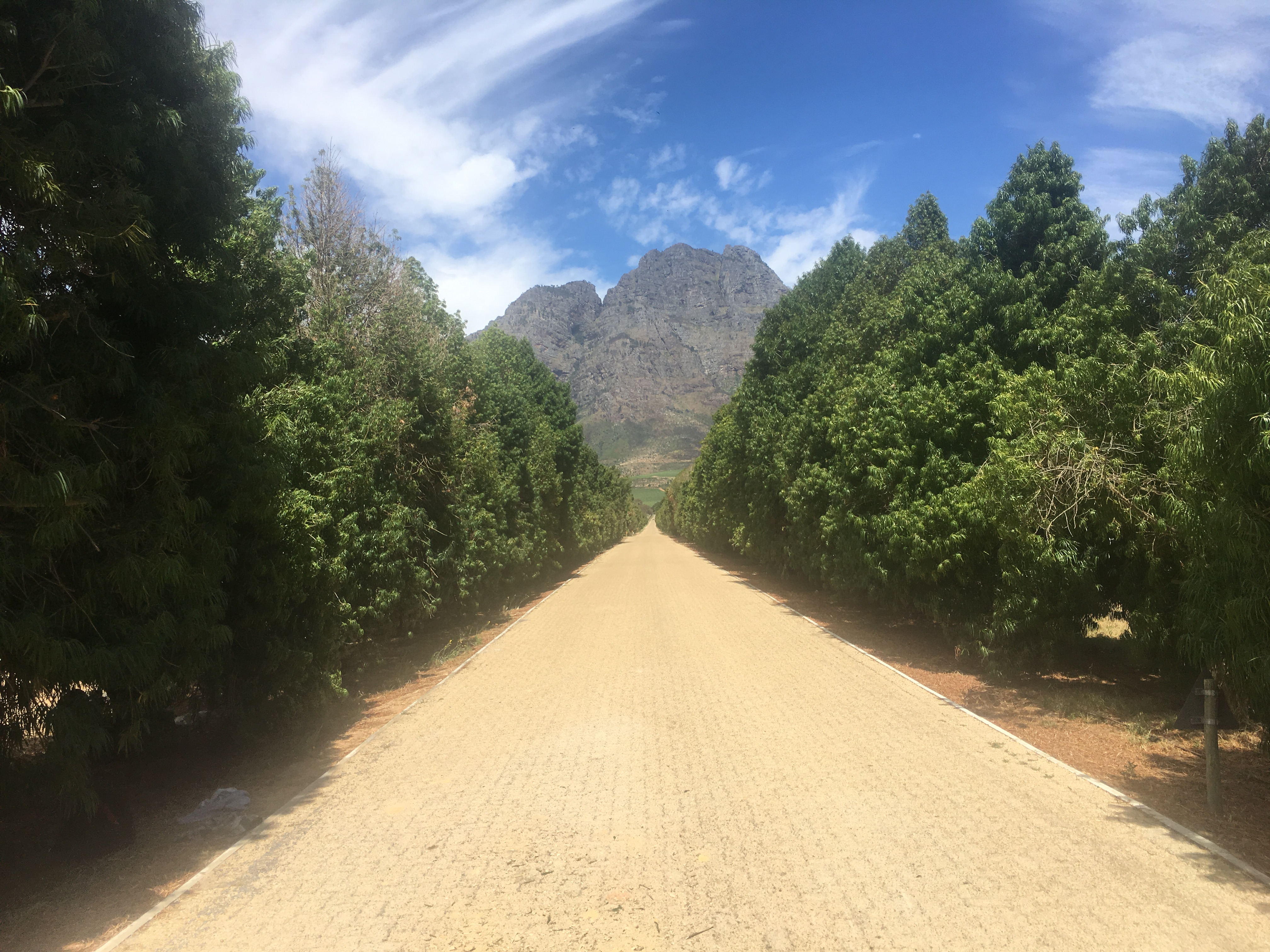 boschendal-avenue