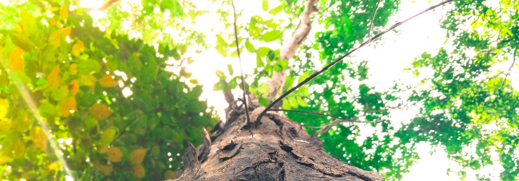 Treeification