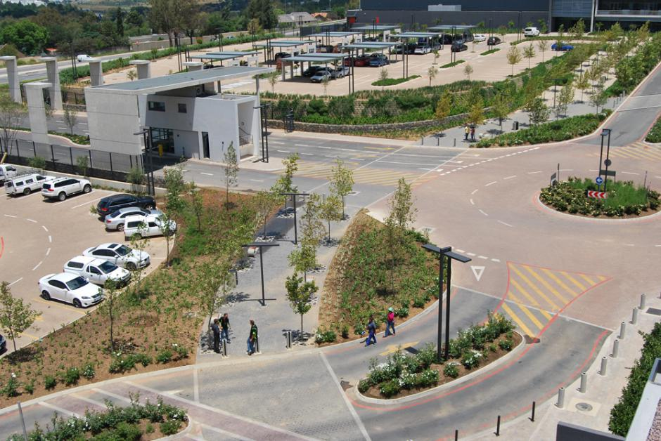 Just trees for Insite landscape architects